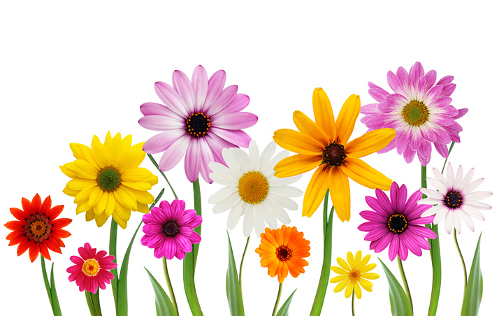 Free stock photo spring flowers the shutterstock blog this stock photo of spring flowers mightylinksfo