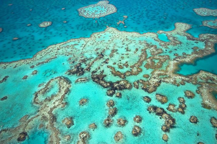 Great Barrier Reef | Dropu