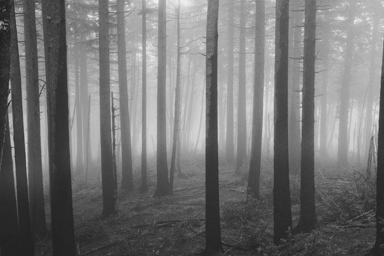 Maryanne Gobble|Misty forest scene