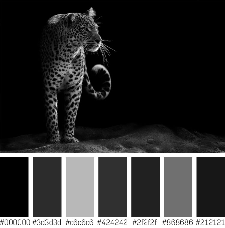 Leopard Color Palette
