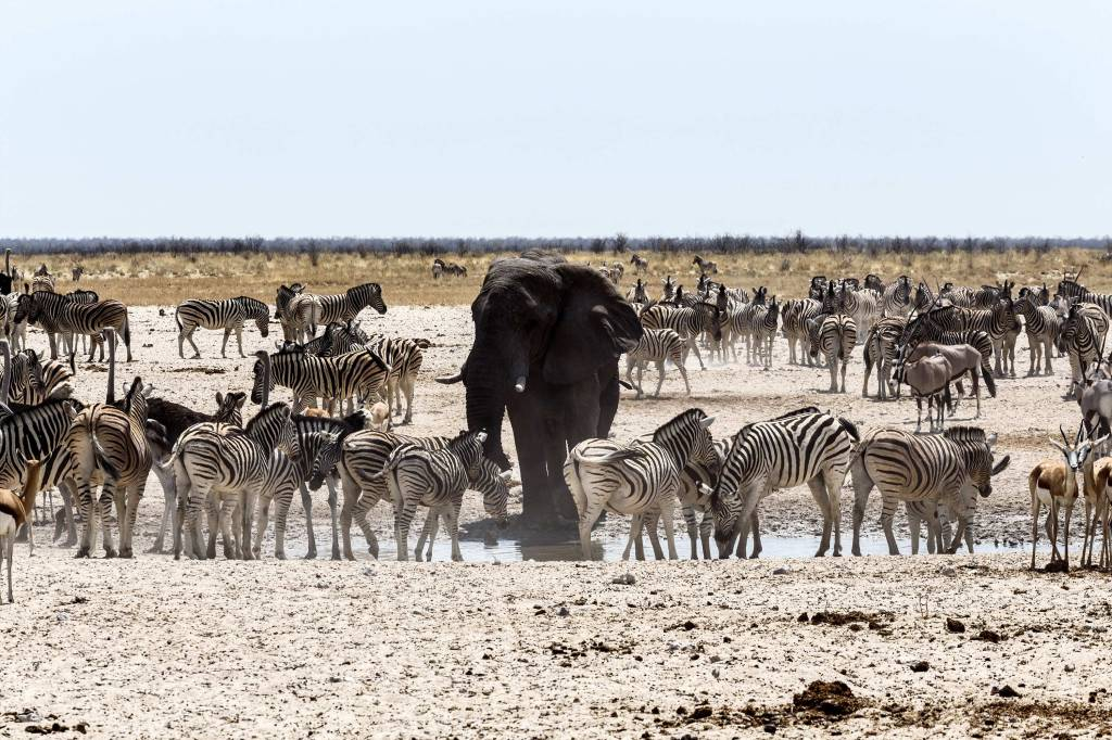 africa watering hole