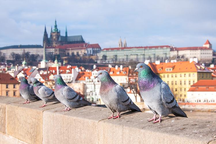 11 Photographers on Taking Unique Photos of Famous Landmarks — Prague Castle