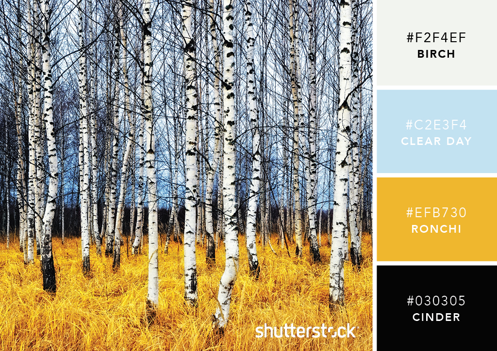 101 Color Combinations to Inspire Your Next Design – Bare Birch Color Palette