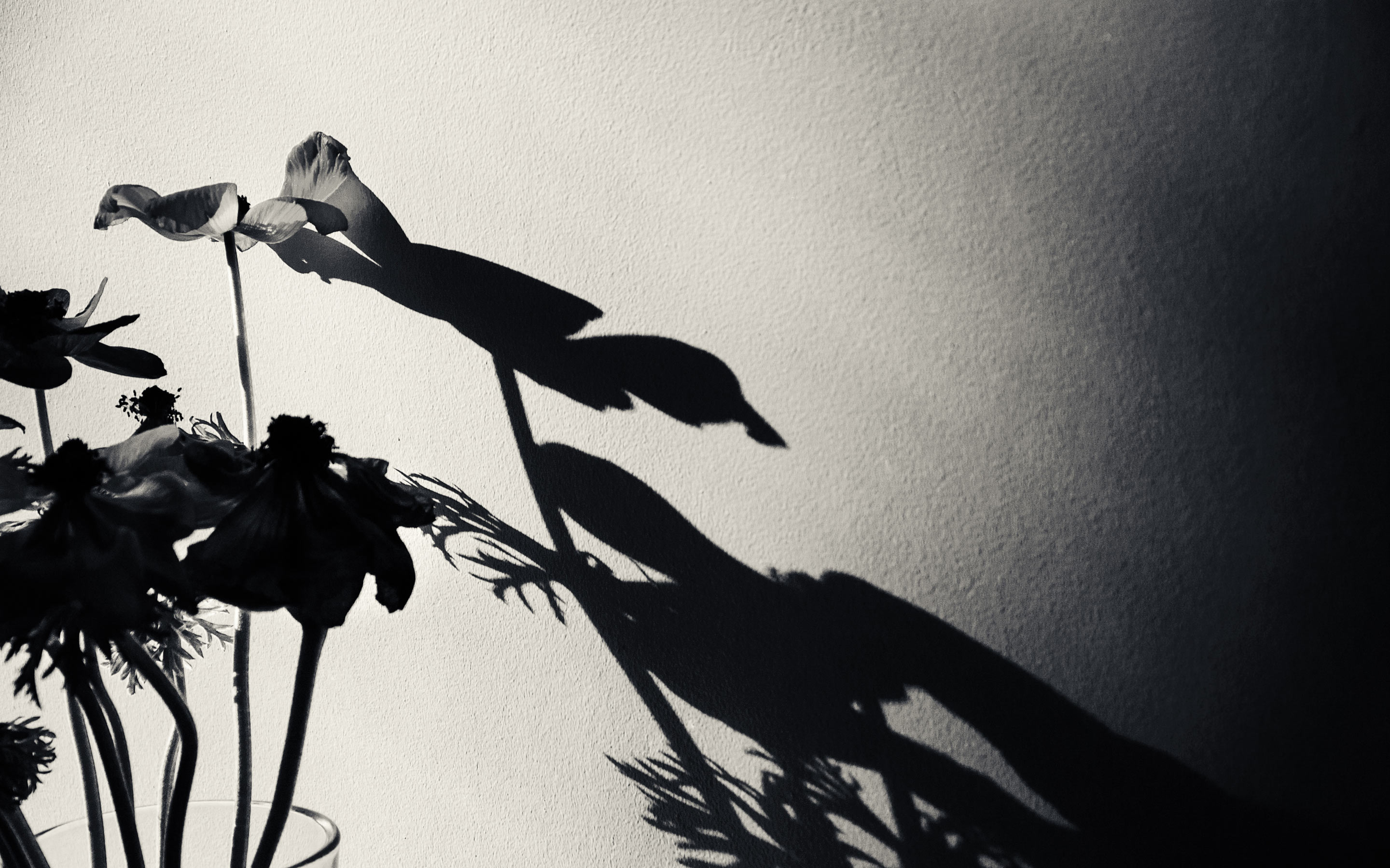 7 Artists on Using Strong Shadows in Photography
