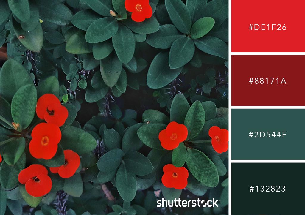 20 Free Seasonal Color Palettes for Your Next Holiday-Themed Project — Bold Blossoms