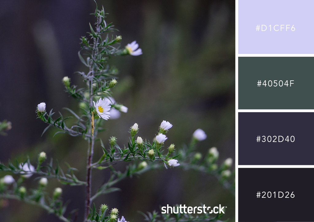 20 Free Seasonal Color Palettes for Your Next Holiday-Themed Project — Forest Flora