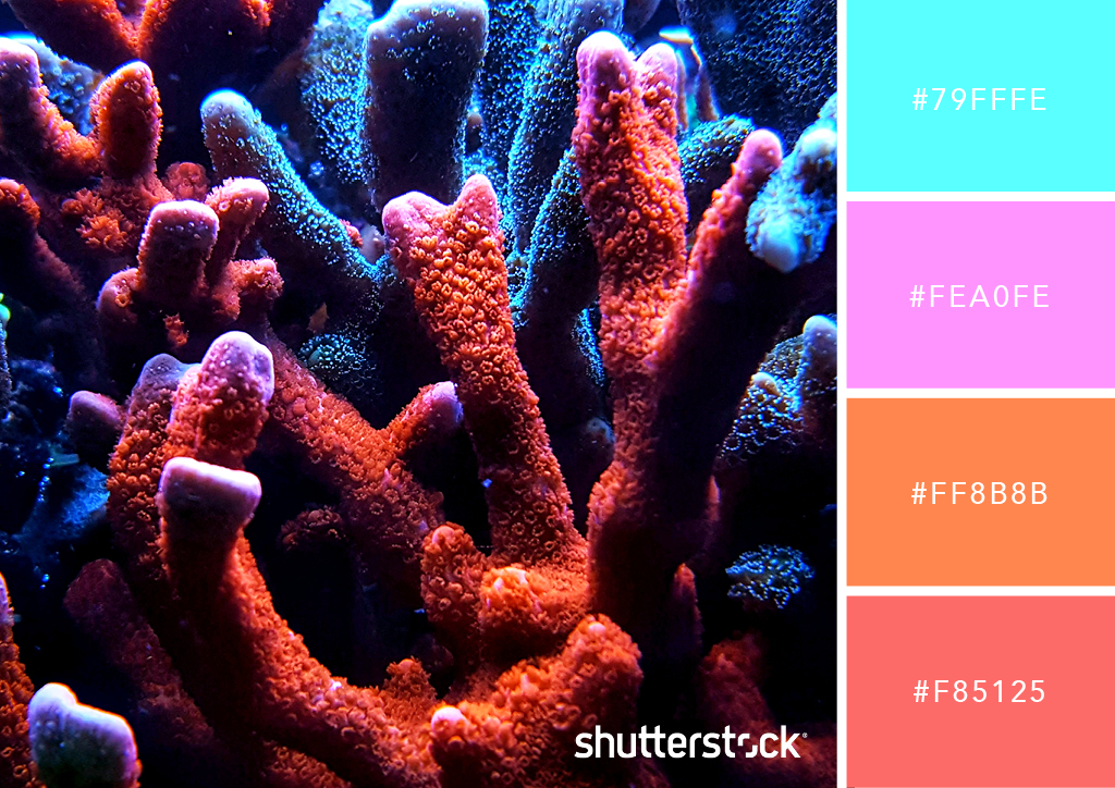 25 Eye-Catching Neon Color Palettes to Wow Your Viewers — Glowing Coral