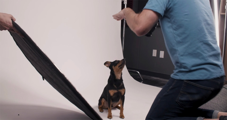 Pet Photography Quick Tips: Keeping and Capturing A Dog's Attention — Diffused Light
