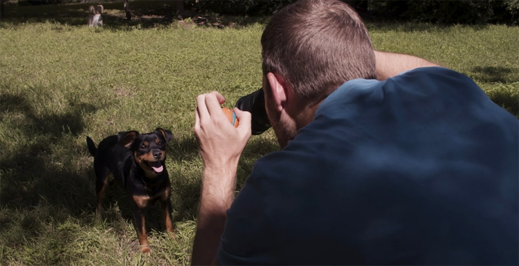 Pet Photography Quick Tips: Keeping and Capturing A Dog's Attention — Toys