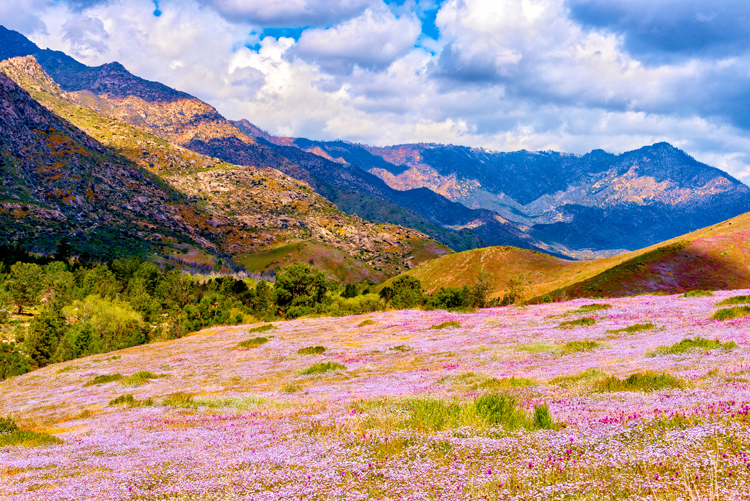 Inspiration from 12 Breathtaking Wildflower Landscapes — Bring a Tripod