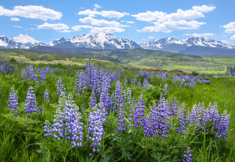 Inspiration from 12 Breathtaking Wildflower Landscapes — Let the Scene Guide Your Eye