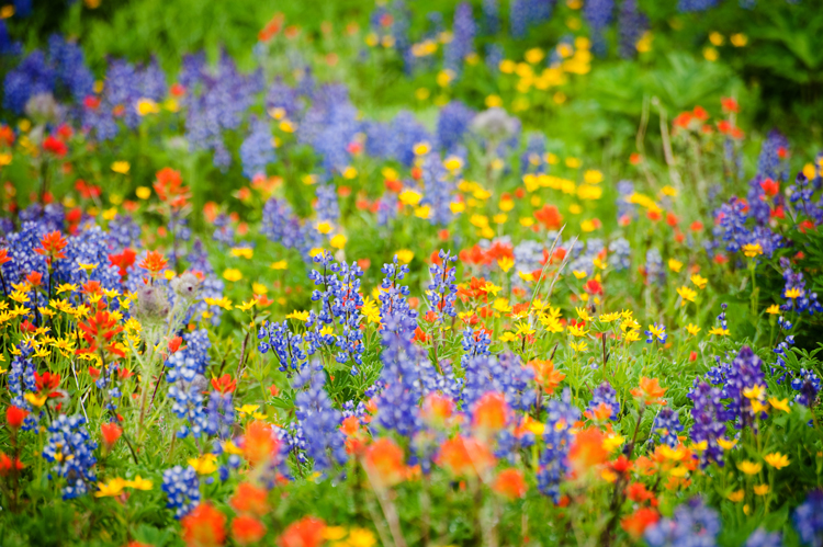 Inspiration from 12 Breathtaking Wildflower Landscapes — Anticipate the Photo's Purpose