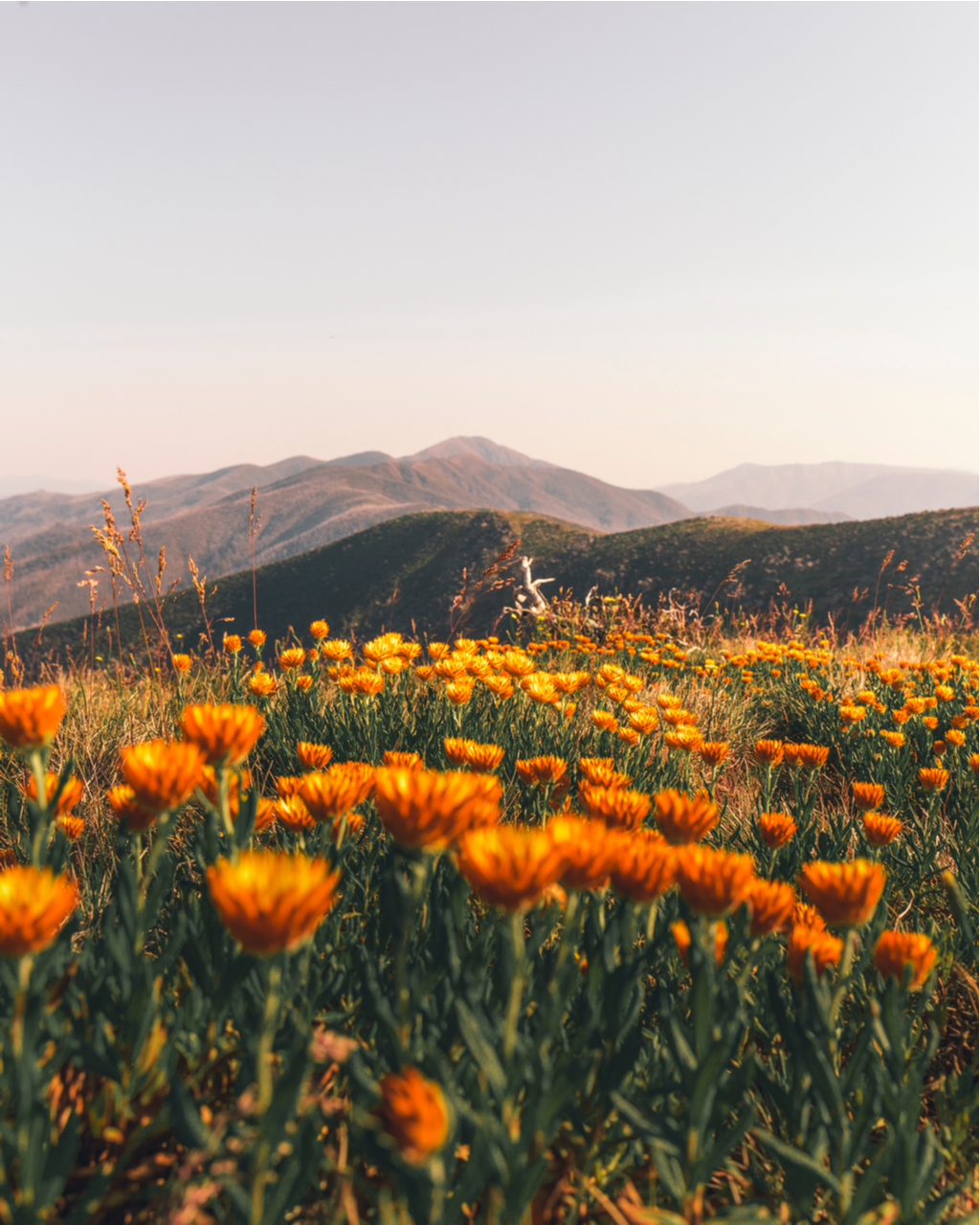 aesthetic visual landscape why important partir shutterstock translated