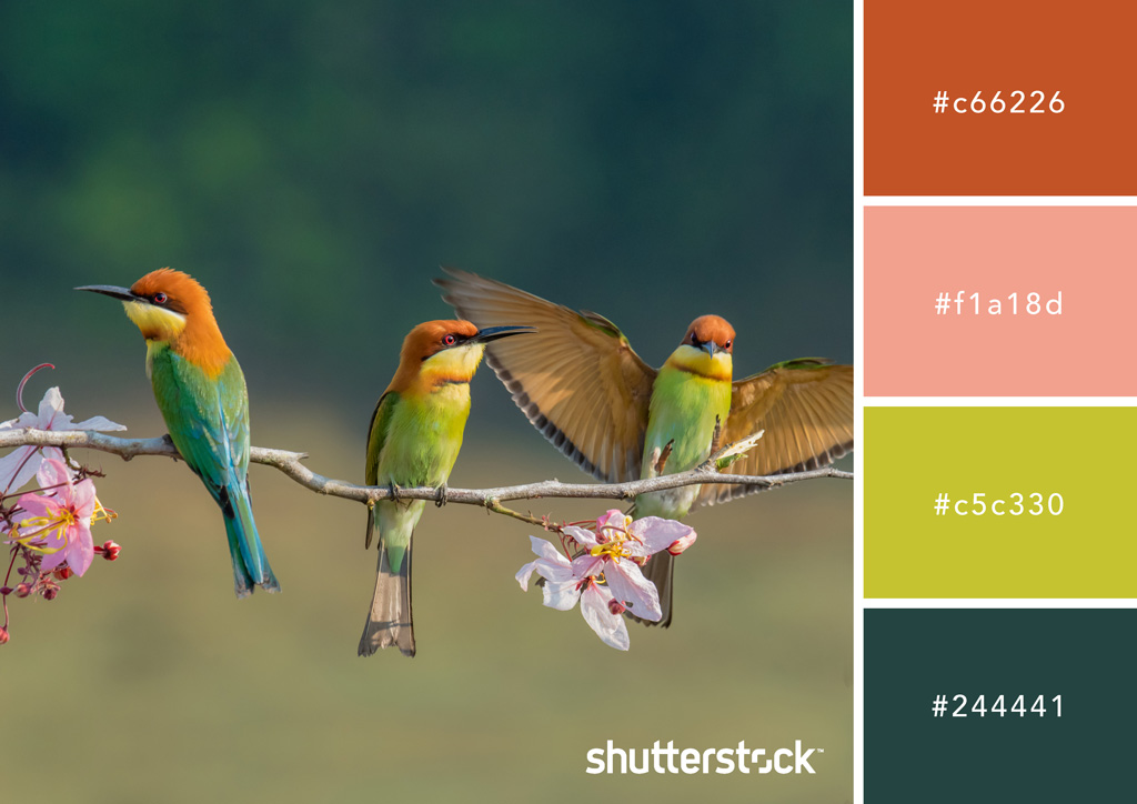 Cozy and Luxurious: Using Earth Colors in Your Designs — Bee Eater Buddies