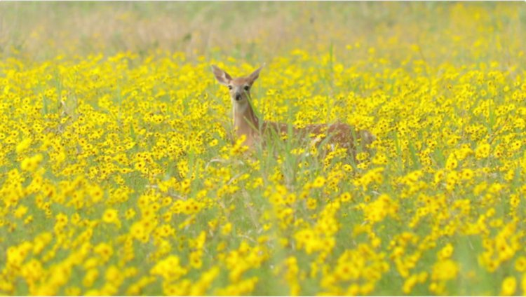 10 Tips on Capturing Dynamic Stock Videos of Nature — Action Shot of a Deer in a Field of Flowers