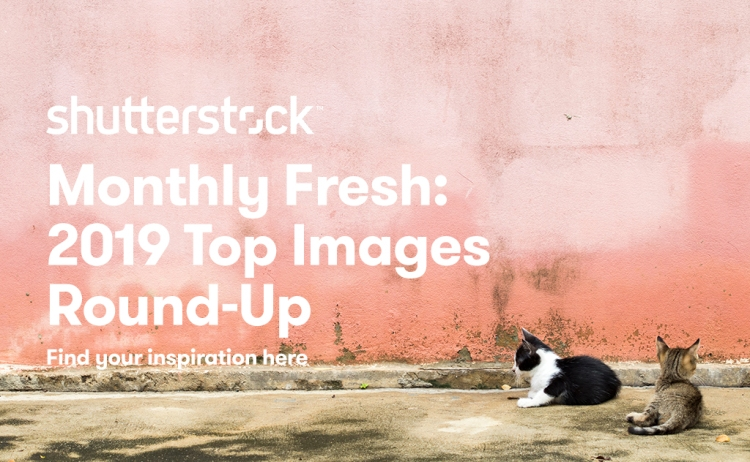 500 Top Images from 2019 to Inspire Your Creativity for 2020 — Shutterstock Monthly Fresh 2019 Collection