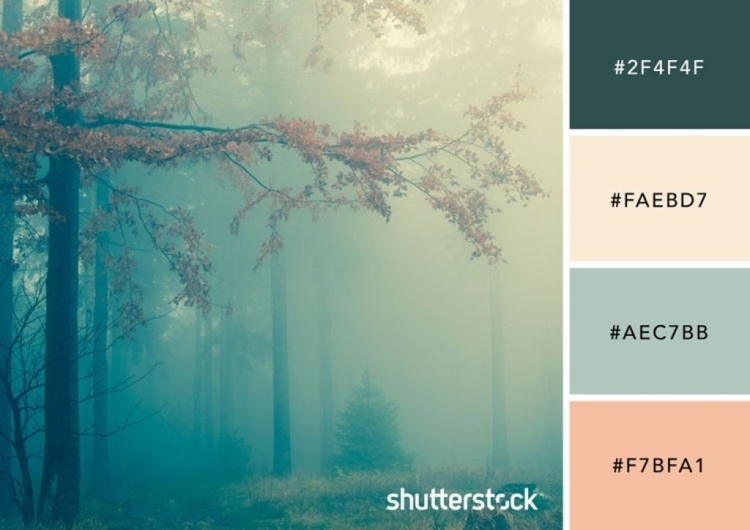 Foggy Forest Color Palette
