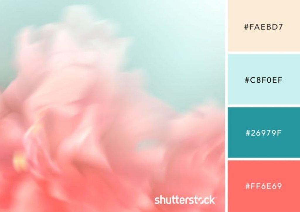 Pink Color Palette